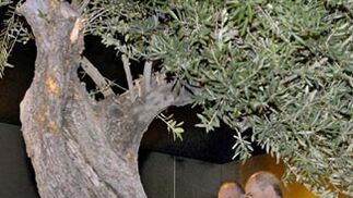 El Rey inaugura 'Tierras de olivo'