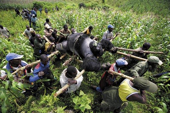 World Press Photo 2007