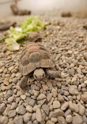 Centro de Recuperación de Especies Amanazadas de Almería