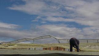Uno de los agricultores trata de reparar su invernadero, que ha quedado muy afectado.  Foto: Salvador Rodr?ez