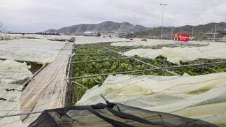 El viento se ha llevado principalmente los techos de los invernaderos.  Foto: Salvador Rodr?ez