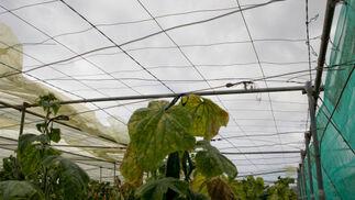 Las plantaciones han quedado al descubierto.  Foto: Salvador Rodr?ez