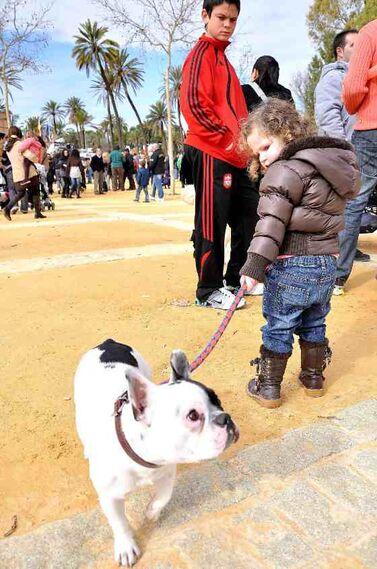 El parque González Hontoria acoge un año más la festividad de San Antón en el que los perros protagonizan la celebración pues de los 800 animales inscritos 600 eran canes.  Foto: Manu Garcia