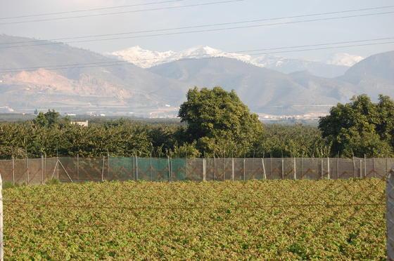 Las cosechas de pepinos, guisantes y tomates, las más afectadas por el temporal. / Rosa Fernández