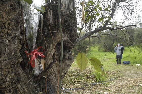 Un ramo de flores en un árbol junto al retrato de una Virgen recuerda a la joven Marta.  Foto: Manuel Gómez