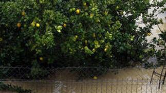 Animales atrapados por las inundaciones en el valle del Guadalhorce.  Foto: Migue Fernández, Sergio Camacho, Agencias