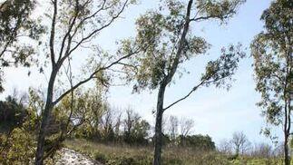 Desprendimientos de tierra en Vejer de la Frontera  Foto: Paco Periñan / Aguilar / Borja Benjumeda / Pascual/ JC Toro / Efe