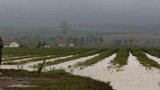 Un hombre fotografía un campo inundado en Tocina.  Foto: Agencias
