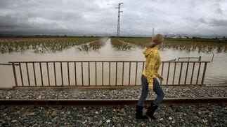 Una chica pasea y observa un campo inundado en Tocina.  Foto: Agencias