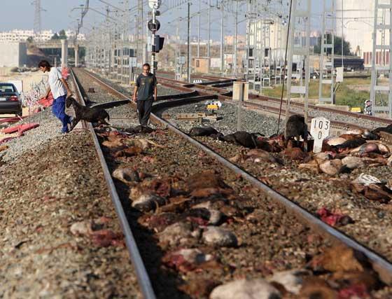 Renfe emitió un comunicado en el que señaló que  este contratiempo se debió al daño sufrido en la estructura del carril ferroviario,  Foto: Juan Carlos Toro