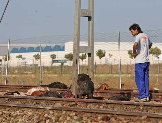 Un descuido del pastor pudo desencadenar el suceso  Foto: Juan Carlos Toro
