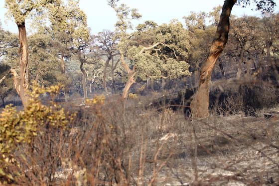 Gracias a la rápida actuación de los bomberos, el fuego sólo acabó con 4 hectáreas de pasto y matorral en Valdespera  Foto: Vanessa Perez