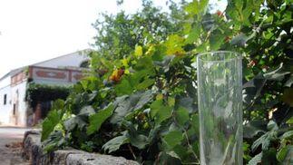Un vaso de tubo, uno de los varios que se pueden ver repartidos por los jardines.  Foto: Manuel Aranda
