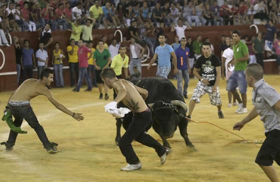 """El broche final de la Feria de San Roque, lo puso el Toro del Aguardiente. Un morlaco toro de nombre """"Empaquetado"""" provocó tensión y espectáculo en la plaza.  Foto: Erasmo Fenoy"""