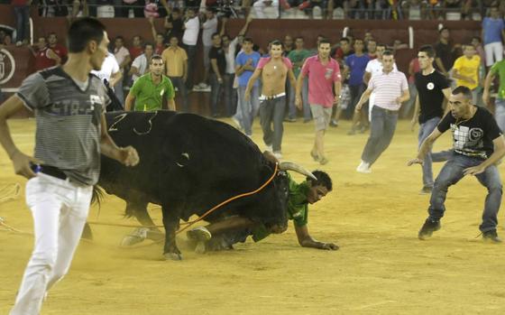 """El broche final de la Feria de San Roque, lo puso el Toro del Aguardiente. Un morlaco de nombre """"Empaquetado"""" provocó tensión y espectáculo en la plaza.  Foto: Erasmo Fenoy"""