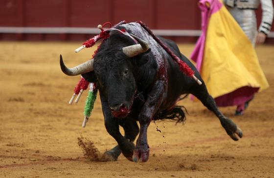 La gran faena de Alfonso Oliva Soto en el tercero se vio malograda por la espada.  Foto: Juan Carlos Muñoz