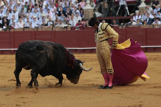 Antonio Barrera en el inicio de la faena frente a su primer toro.  Foto: Juan Carlos Muñoz