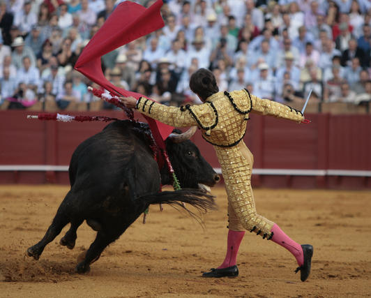 Bella instantánea del primer toro de Barrera.  Foto: Juan Carlos Muñoz