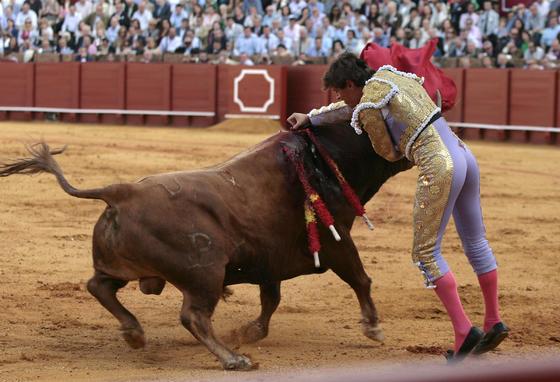 Tendero estuvo a punto de recibir una cornada dura.  Foto: Juan Carlos Muñoz