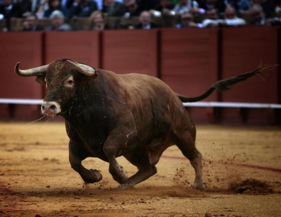 El tercer toro de la tarde, de nombre Guitarra.  Foto: Juan Carlos Muñoz
