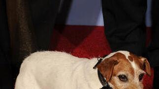 Uggie, el perro de la película 'The artist', Globo de Oro a mejor comedia o musical. / AFP