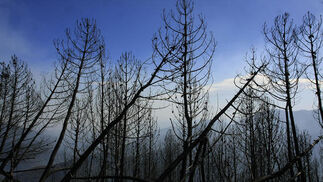 Alguna de las zonas calcinadas que podían verse ayer  Foto: Javier Flores