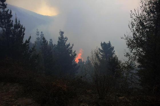 El fuego en el bosque  Foto: Javier Flores