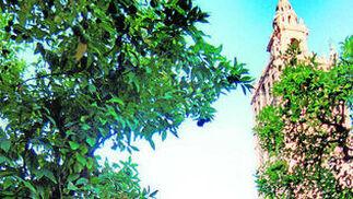 En el Patio de los Naranjos de la Catedral de Sevilla.