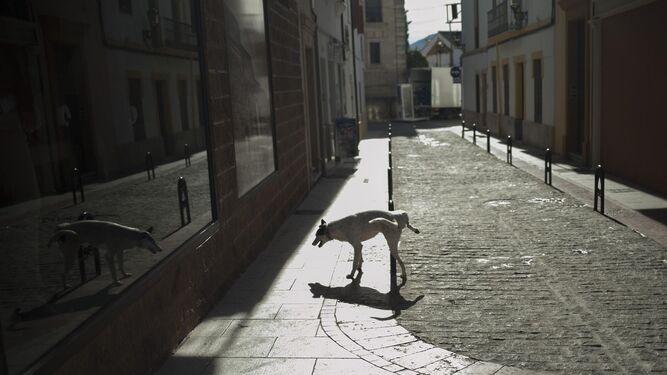 Perro paseando por una calle de Ronda.