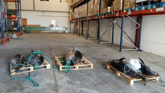 Intervienen 3.412 kilos de pescado y marisco ilegal y 13 barcos en Málaga