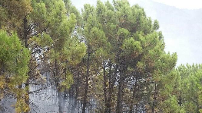 Efectivos del Infoca durante el trabajo en el incendio declarado en un pinar próximo a la urbanización La Zagaleta en el término municipal de Benahavís.