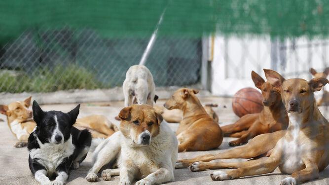 La sociedad protectora recoge casi animales y da en for Protectora de animales malaga ciudad jardin