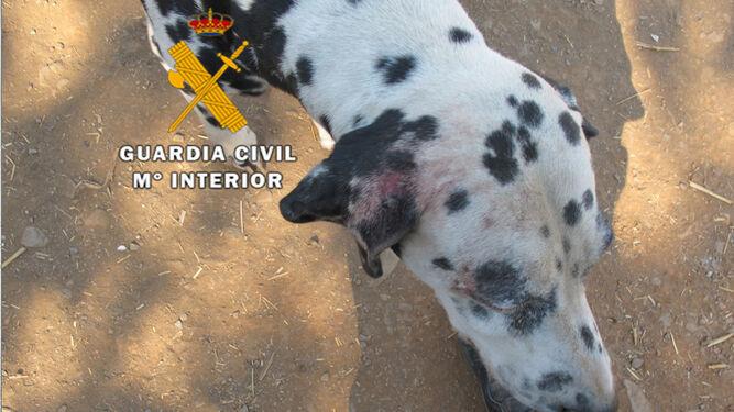 Rescatan a 38 perros e investigan por abandono de animales a tres personas