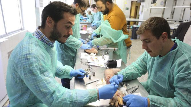 Residentes de Traumatología ensayan una técnica quirúrgica durante el curso.