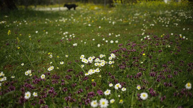 La primavera en su esplendor
