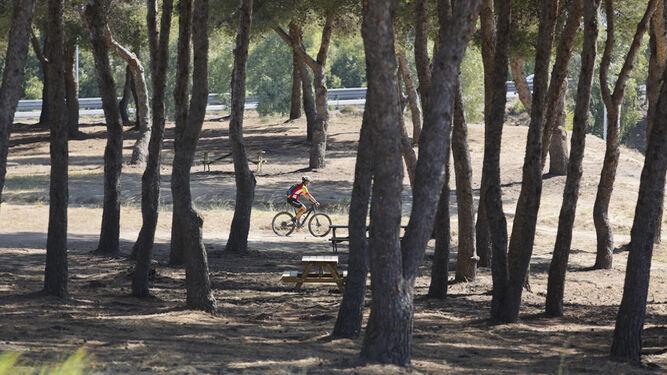 El Campamento Benítez, o cómo poner un bosque a disposición para que no haya nadie.