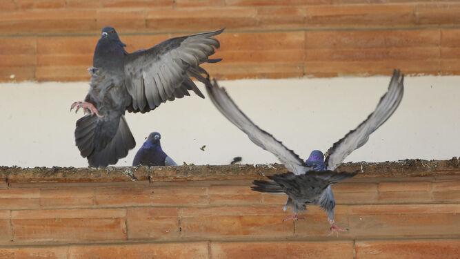 Varias palomas campan a sus anchas en un edificio de la Alameda de Colón