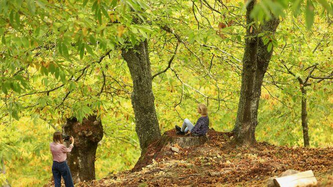 Castanos En El Valle Del Genal El Bosque De Cobre Empieza A Brotar
