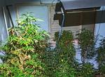 Una llamada por malos tratos saca a la luz una plantación de marihuana en un dormitorio