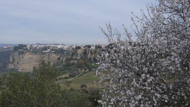 Almendros-flor-Tajo-Ronda-fondo_15451560