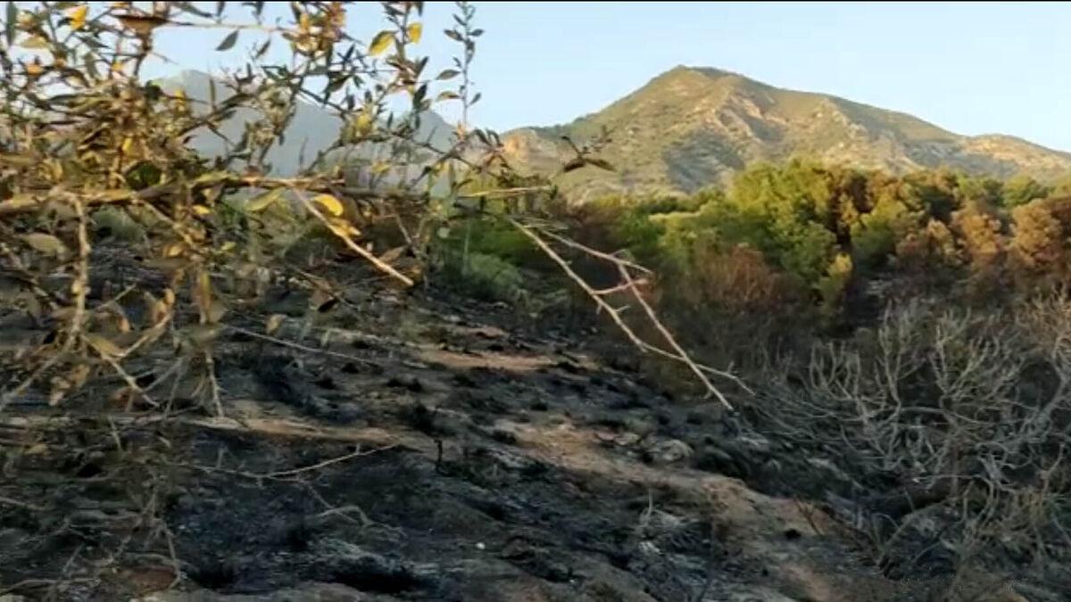 Lamentan los daños ecológicos por el incendio de Maro